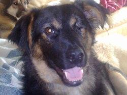 Milo, chien