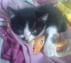 Milo, chat Gouttière