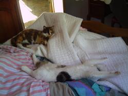 Milo Et Noisette, chat