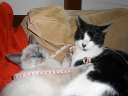 Milou, chat Gouttière