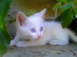 Milounet, chat Gouttière