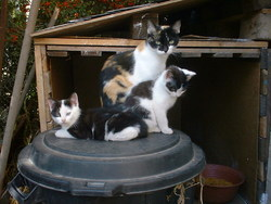 Mina Et Galipette, chat