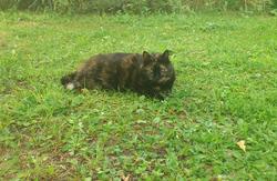 Mimi - Au Paradis, chat