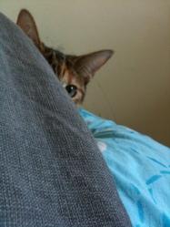 Mimi, chat