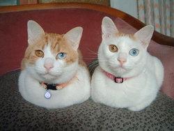 Mimi Et Pon Pon, chat Gouttière