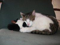 Mimi , chat Gouttière