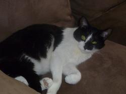 Mimi, chat Gouttière