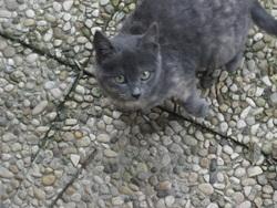 Mimi Au Ciel, chat Gouttière
