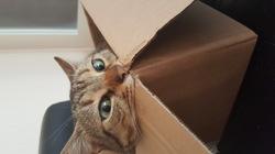 Izi, chat Gouttière