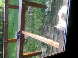 Mimi Et Crocro, chat Gouttière