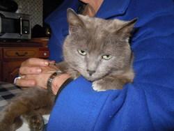 Mimi La Grisette, chat