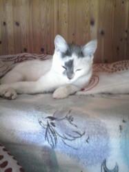 Mimi La Miaule, chat