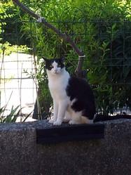 Mimi Ou Mystigris, chat