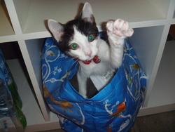 Mimi_cat_zoé, chat