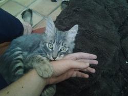 Mimichou, chat Gouttière