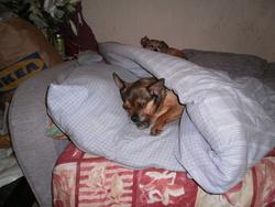 Mimie, chien
