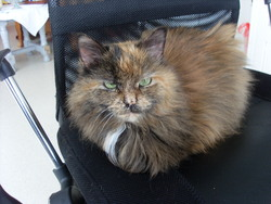 Mimie, chat