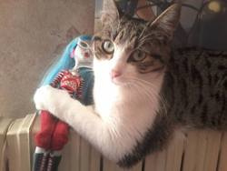 Mimie, chat Européen