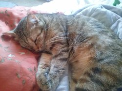 Mimie , chat