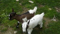 Mimie Et Lyly, autres