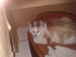 Mimin, chat Gouttière