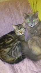 Mimine, Lysy, Mirtille, chat