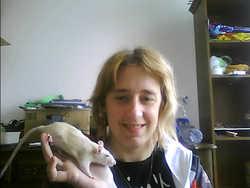 Miminette, rongeur Rat