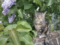 Miminne, chat Gouttière