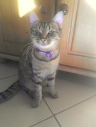 Mimiss, chat Gouttière