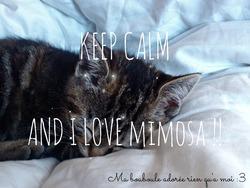 Mimosa, chat