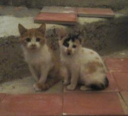 Mimouna Et Masouda, chat Gouttière