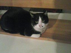 Mimousse , chat Gouttière