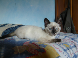Mimsy, chat