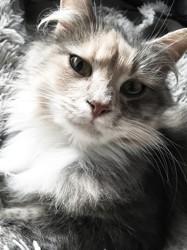 Mina, chat