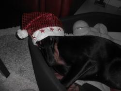 Mina, chien Dobermann