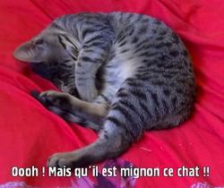 Mindouce, chat