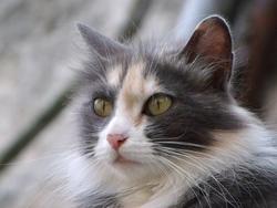 Minette , chat Gouttière