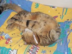 Minette , chat