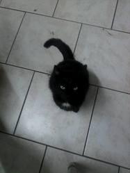 Minette, chat