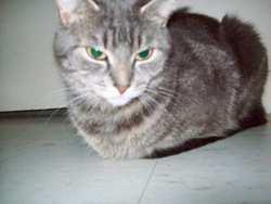 Minette Trudel, chat