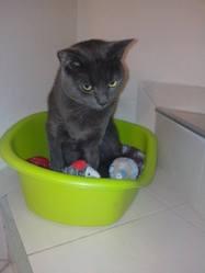 Mini Cat, chat Gouttière