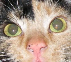 Mini Fée, chat