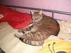 Mini-Mousse, chat