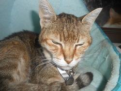 Minie, chat Gouttière