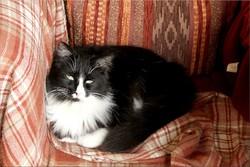 Minipouss', chat Gouttière