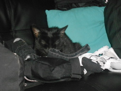 Minnette, chat