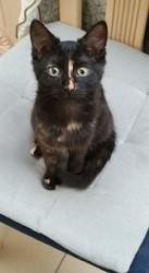 Minnie, chat Européen
