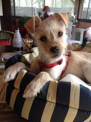 Minnie, chien