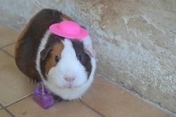 Minnie , rongeur