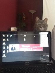 Minnie, chat Gouttière